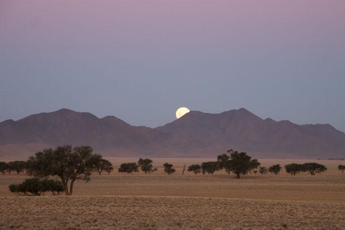 Namib Desert, 2018