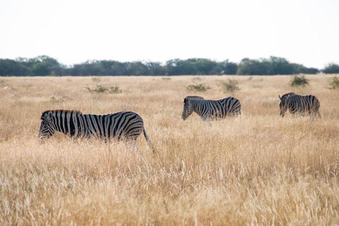 Etosha, Namibia, 2018