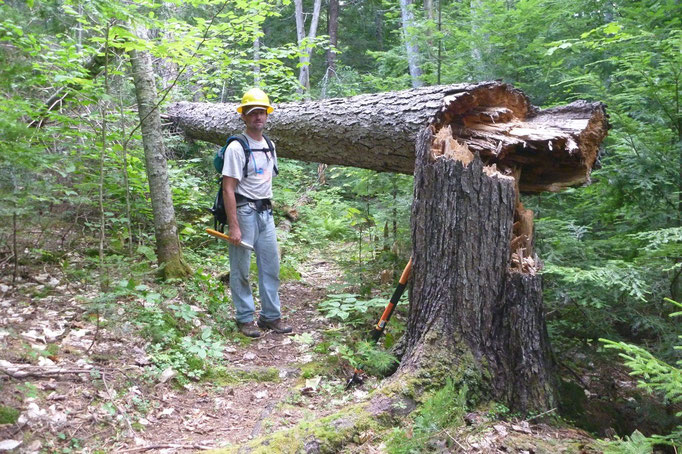 Joe contemplates the removal of a 200+ year old spruce blowdown