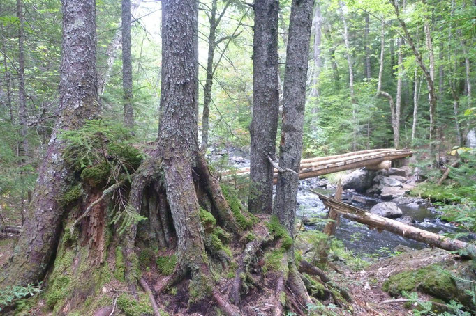 Old pine stumps show evidence of the area's rich logging history as the bridge symbolizes a newer recreation based approach to land management