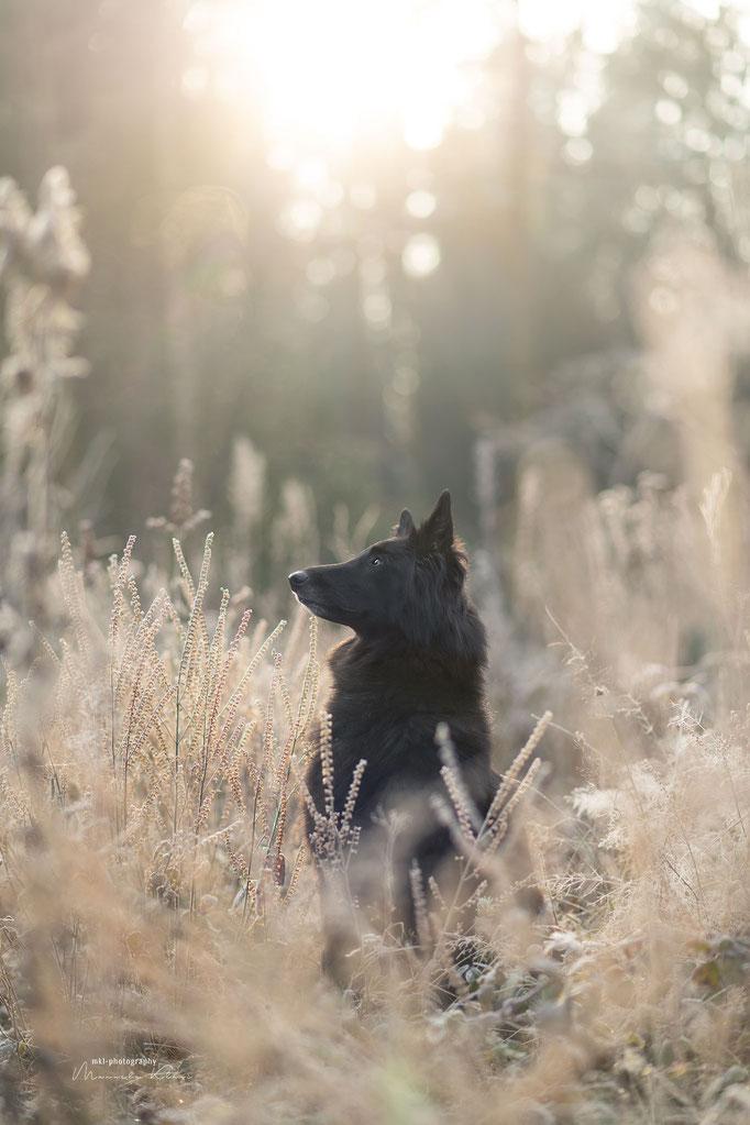 Hundeportrait im weichen Licht