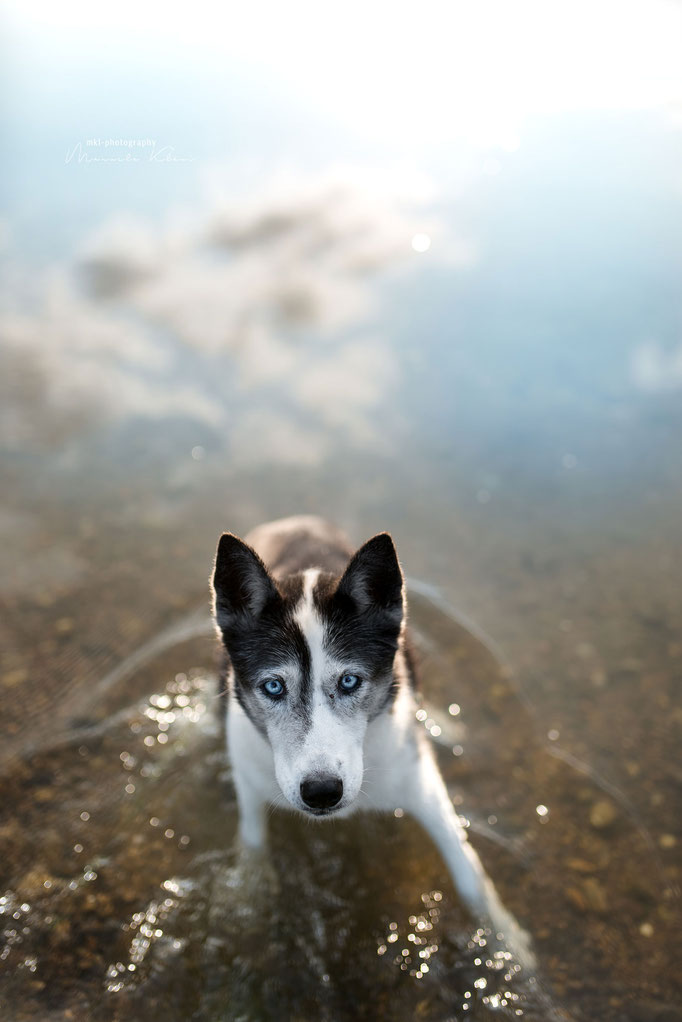 Hundeportrait im Wasser