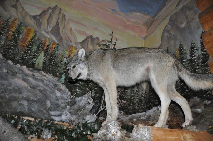 Neben dem Bären haben wir auch einen Wolf zur Ansicht