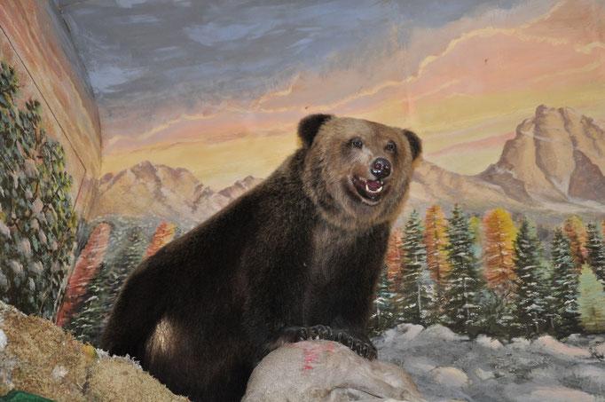 Der Bär der Bärenhütte