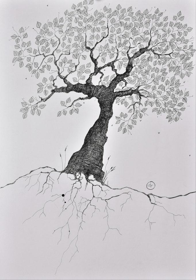 Arbor 1. Encre sur papier lisse Clairefontaine 250g