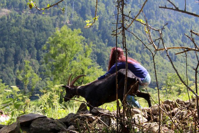 Laura bringt die Ziege oder umgekehrt