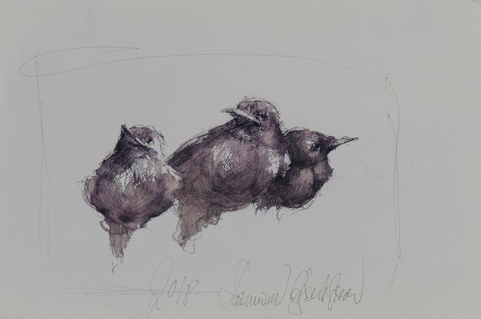 Drillinge, 2018, 39x26, Aquarell/Bütten, N48                       ©Raimund Egbert-Giesen