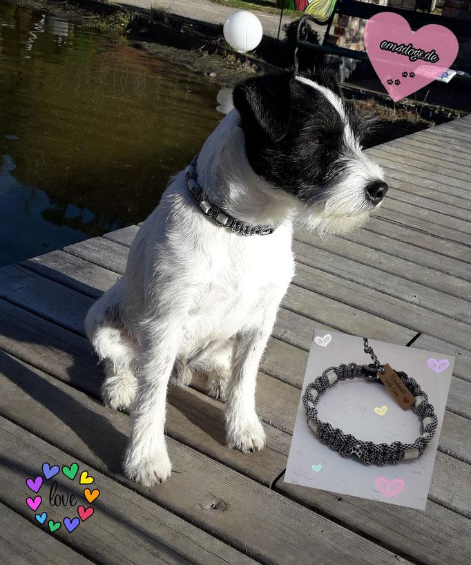 em4dogs.de Barny mit EM-Halsband