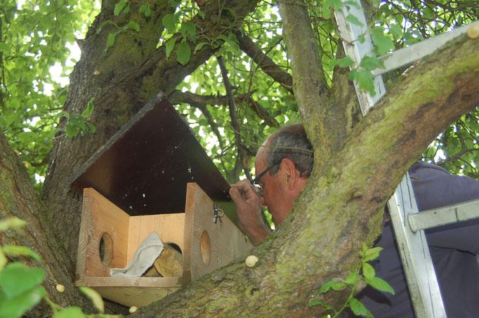 Der Vogelschutzbeauftragte persönlich bei der Arbeit Foto: NABU Trebur