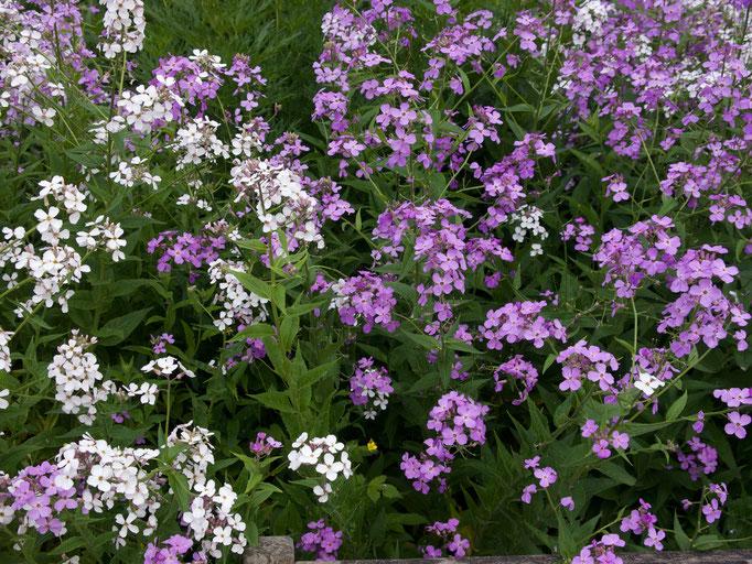 Gartenreise nach England Great Dixter Garden