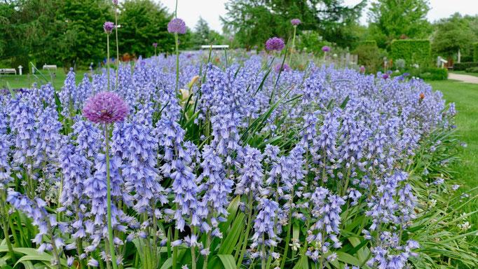 Park der Gärtehttps://www.misselliesreiseblog.com/2018/04/18/der-park-der-gärten-ein-geheimtipp-für-alle-gartenliebhaber-finden-sie-im-oldenburgischen-bad-zwischenahn/n