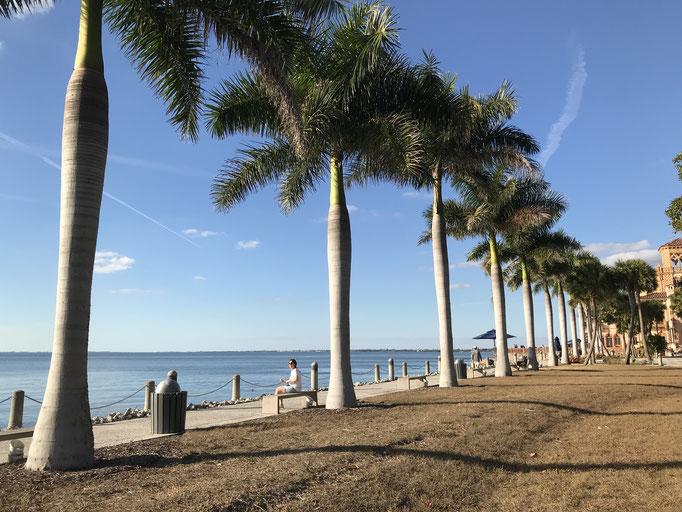 Bild: Palmen am Ende des Ringling Geländes