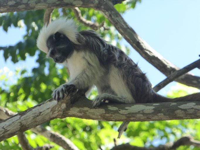 Bild: Kleiner Affe im Baum