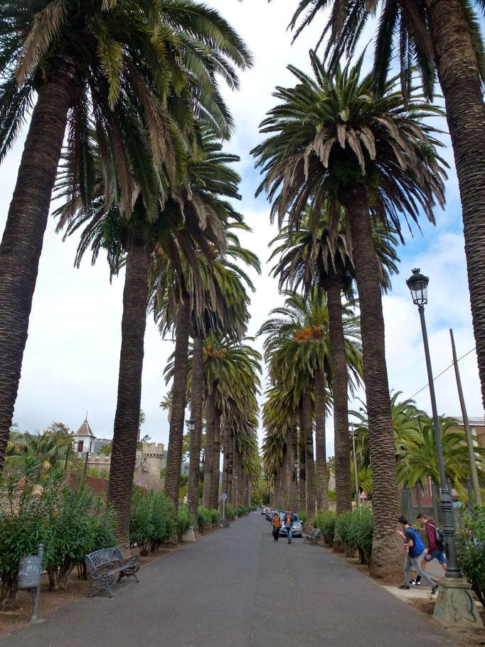 Bild: Avenue Paseo de las Palmas