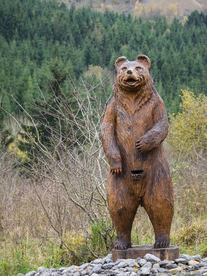Bild: Bär im Rübeland