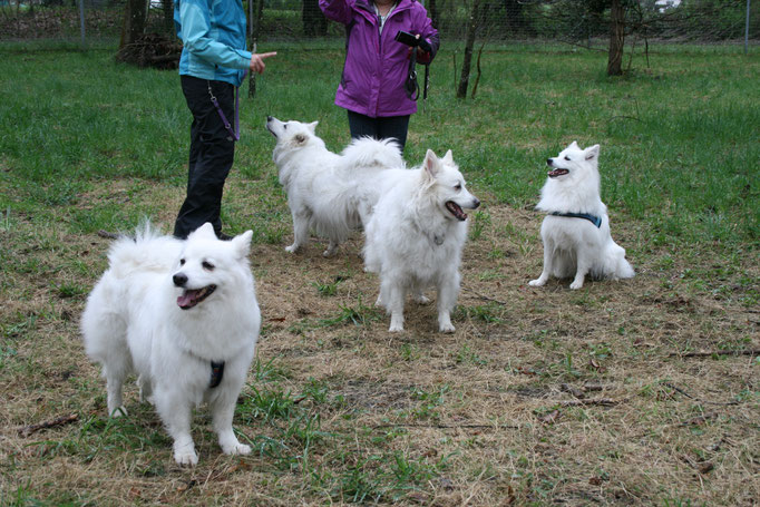 Vorne: Riga, Trixy und Leni, hinten Rani