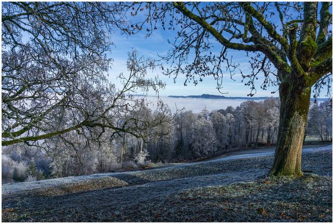 Frostiger Gurten 858 m.ü.M. Hausberg der Stadt Bern - 27.12.2018 - Bern - Schweiz Switzerland Suisse Svizzera Svizra