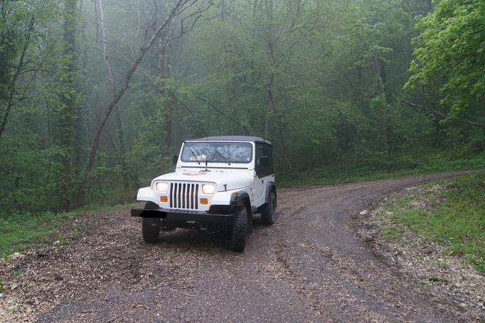 Schöne Wege durch den Wald