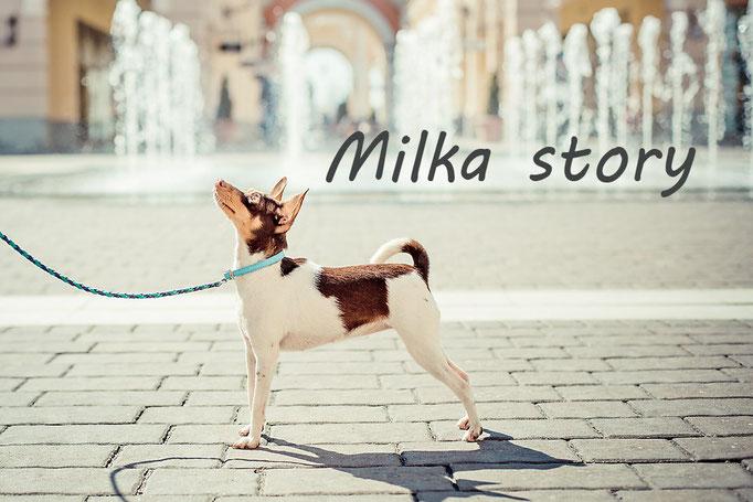 #тойфокстерьер #milkastory #милкастори