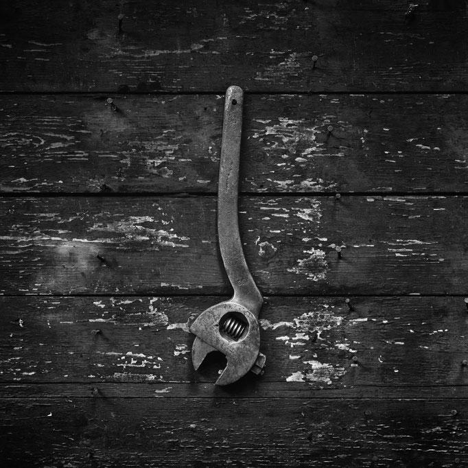 """English Parrot"", © 2014 Erwan Masson"