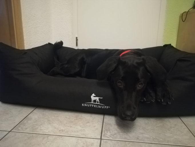Knuffelwuff bedrucktes Hundebett Ryan 120 x 85 cm schwarz