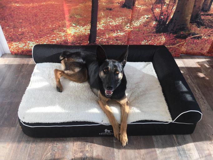 Knuffelwuff orthopädisches Hundebett Arizona schwarz 120 x 80 cm