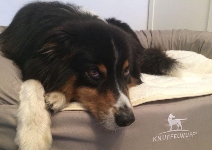 Knuffelwuff orthopädisches Hundebett Jessy beige XXL