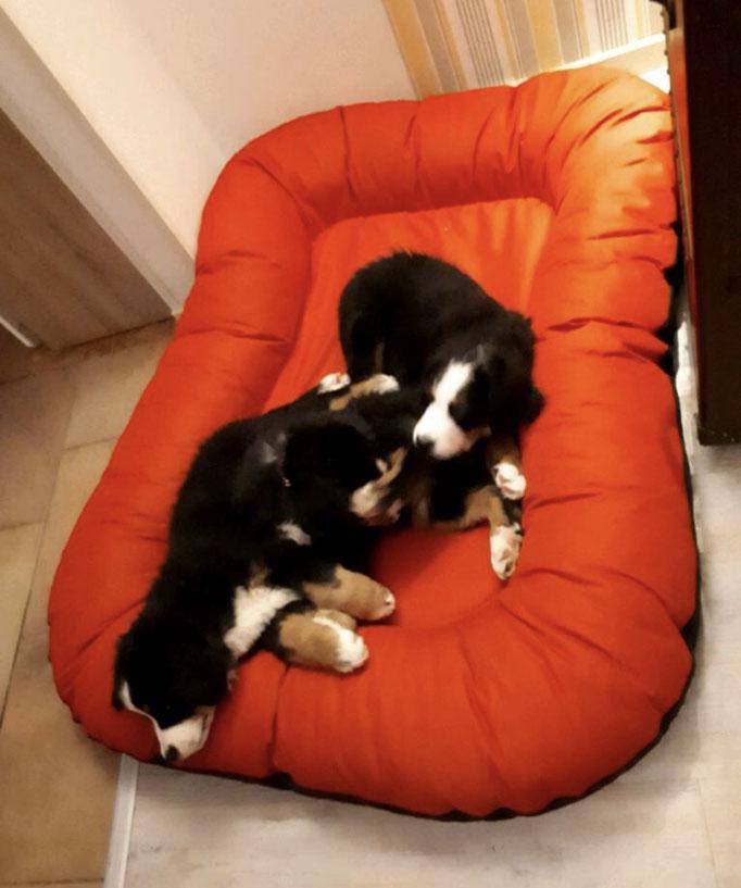 Knuffelwuff Hundebett Lucky Farbe rot XXXL
