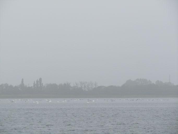 Nebel auf dem Bodden