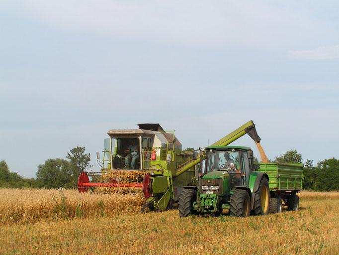 Getreideernte im August