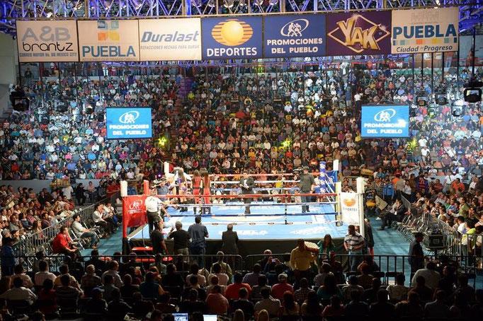 プロボクシング情報