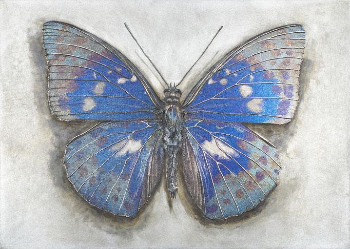 碧羅の蝶     H91×W128 mm