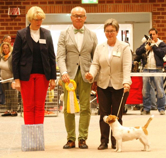 "Bester Junghund, Jack Russell Terrier ""Daisy Blossom´s Goldrunner, Bes. K. Watts aus Dänemark"
