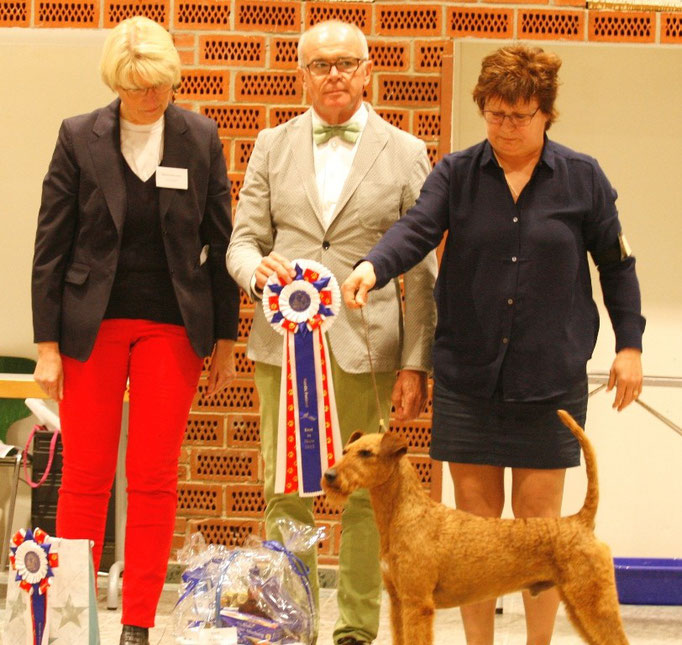"Best in Show, der Irish Terrier ""Red Wire Mastermind"" Bes. B. & A. Sköld aus Schweden"