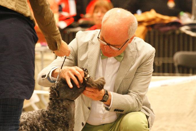 Der Richter Piotr Król macht eine Zahnkontrolle beim Kerry Blue Terrier
