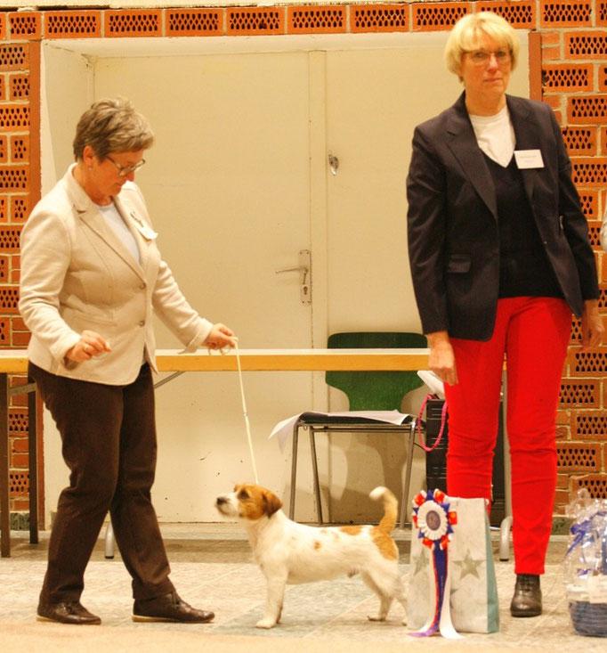 """2. Best in Show, der Jack Russell Terrier """" Daisy Blossom´s Goldrunner"""", Bes. K. Watts aus Dänemark"""