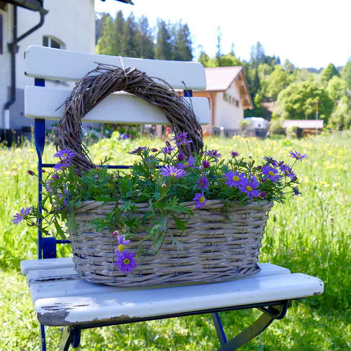 alter Stuhl Birkenkranz dekoriert mit einem Korb mit blauen Gänseblümchen