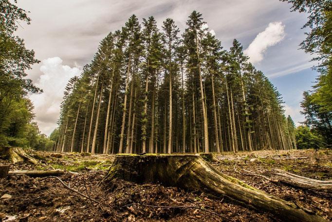 Bos/Bomen