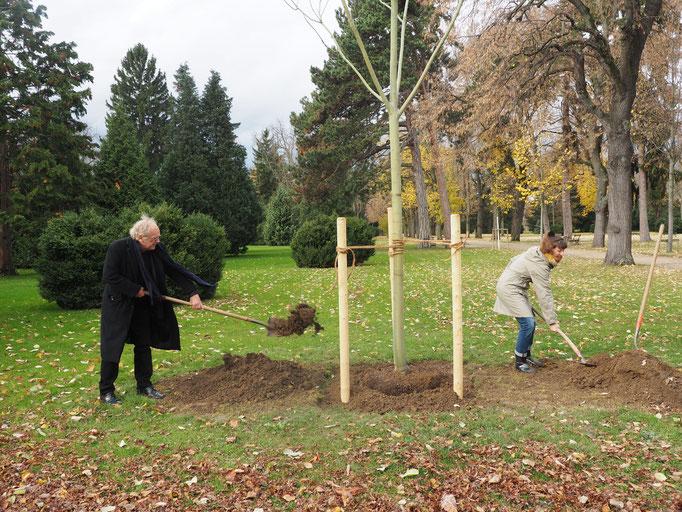 Pflanzung Baum der Poesie am 18.11.2016 (Fotos: Vanessa Serrano)