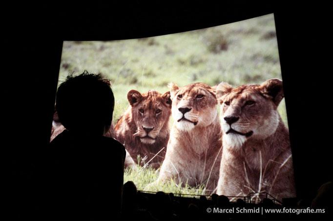 Filmpremiere von Animalopolis im IMAX Filmkino Luzern