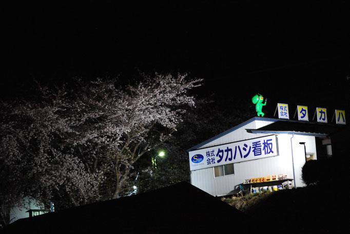 夜桜、カッパ、LED灯光器
