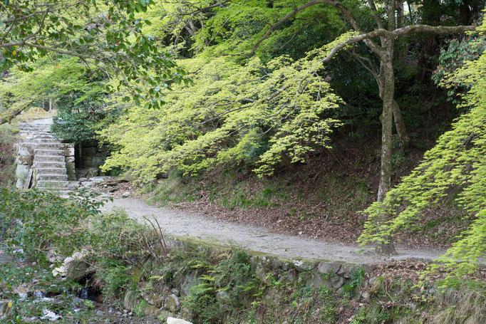 渓流のわきにある道