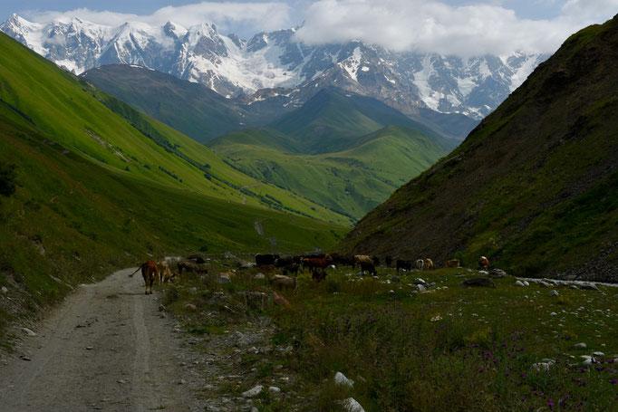 Zicht op één van de hoogste punten in de Hoge Caucasus - Mount 'Shkhara' (5201 m)
