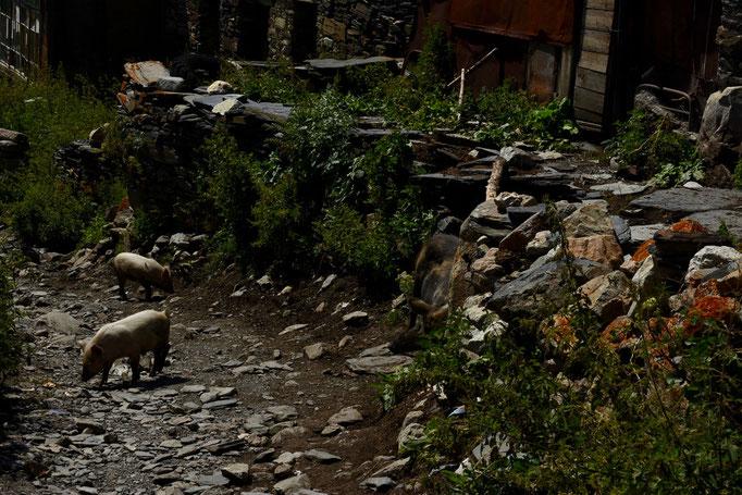 De straten in Ushguli zijn niet geplaveid en de dieren lopen er kriskras door elkaar