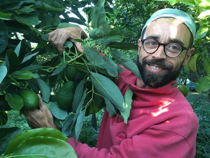 Cesare Melfa - Avocats