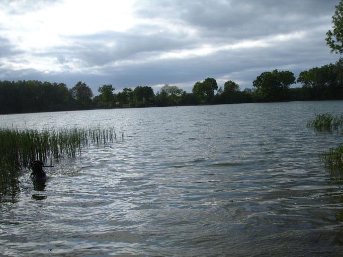 Blick auf den Beidendorfer See
