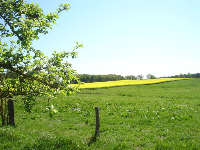 Blick auf die Mühlenkoppel an der Rückseite des Hofes