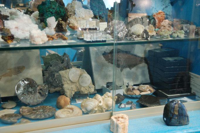 Vitrine Fossiles et Météorites