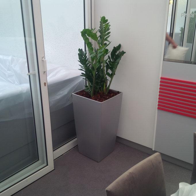 Location de plantes pour vos événements à Paris
