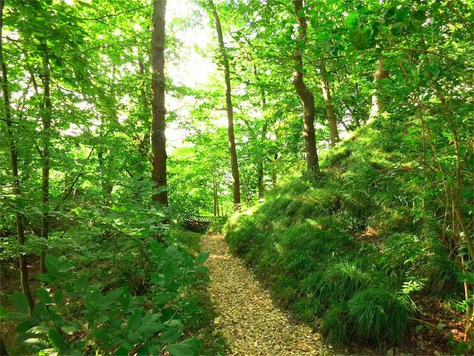 Waldansicht Helenenweg-Garten